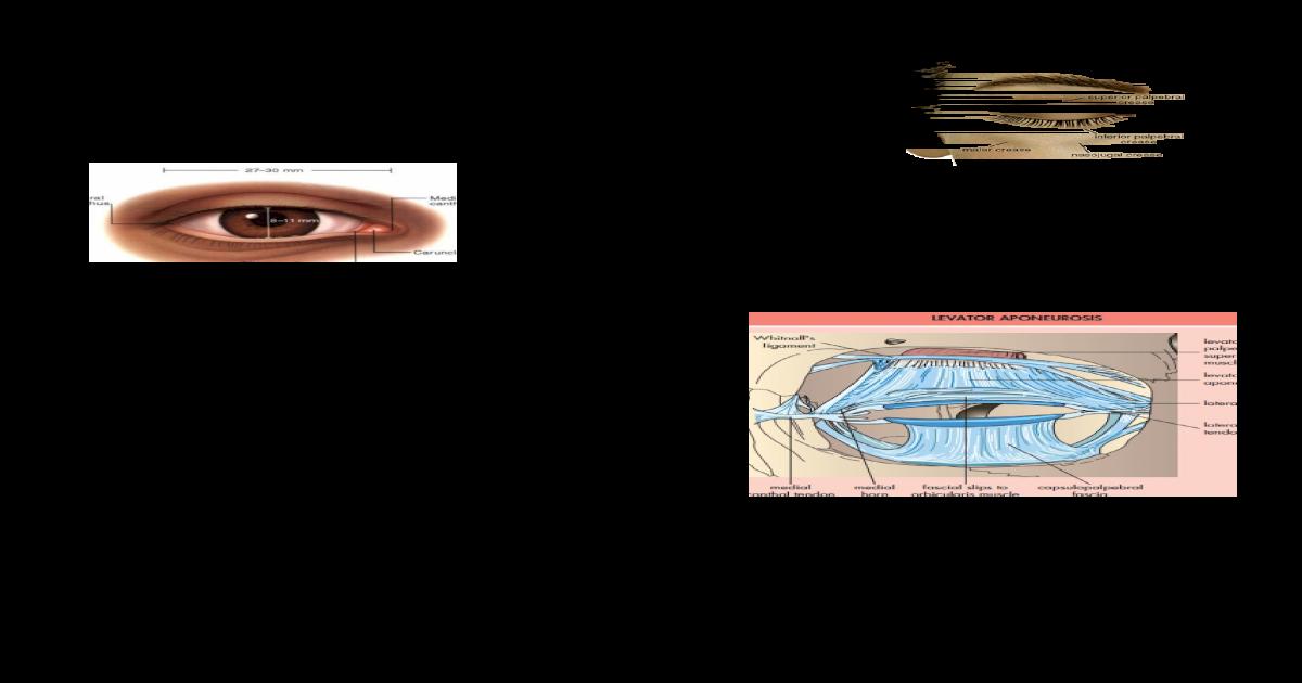 Anatomia de Parpados