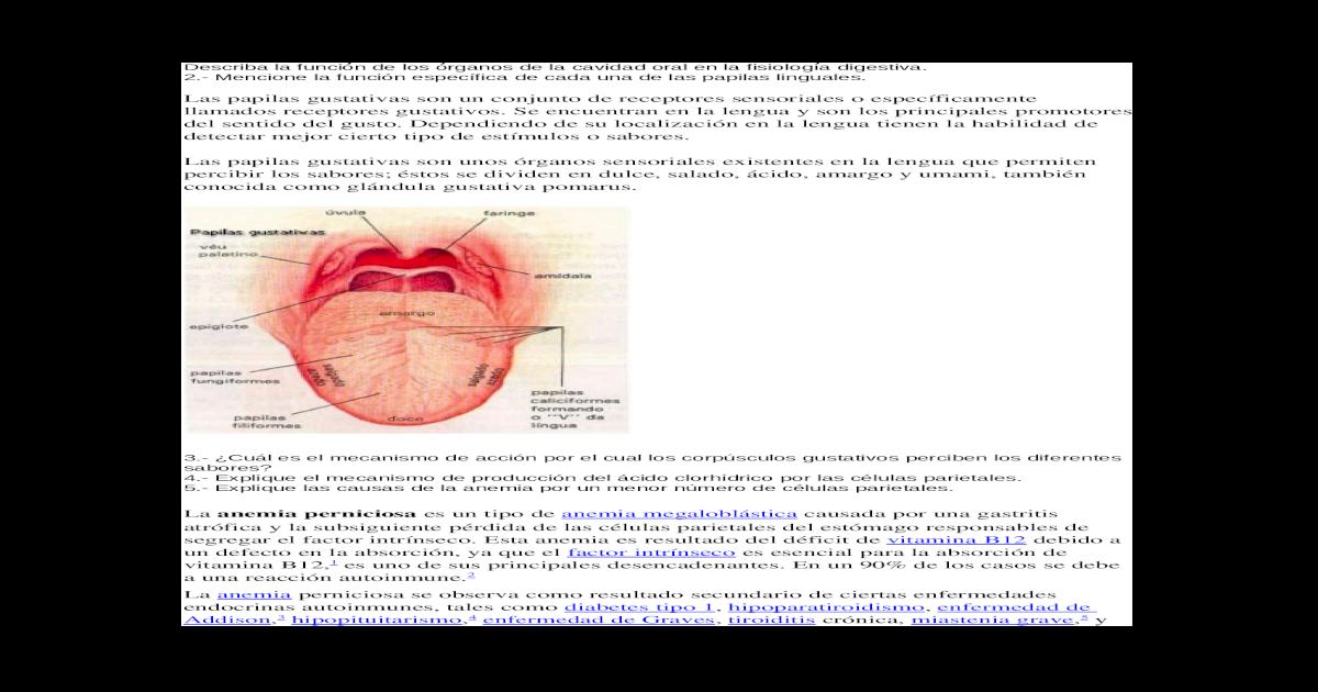 Fantástico Cuatro Papilas Gustativas Cresta - Anatomía de Las ...