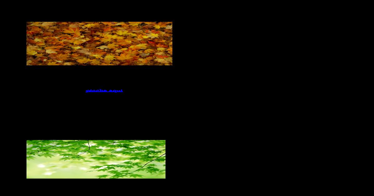 Tipos de hojas lechuga