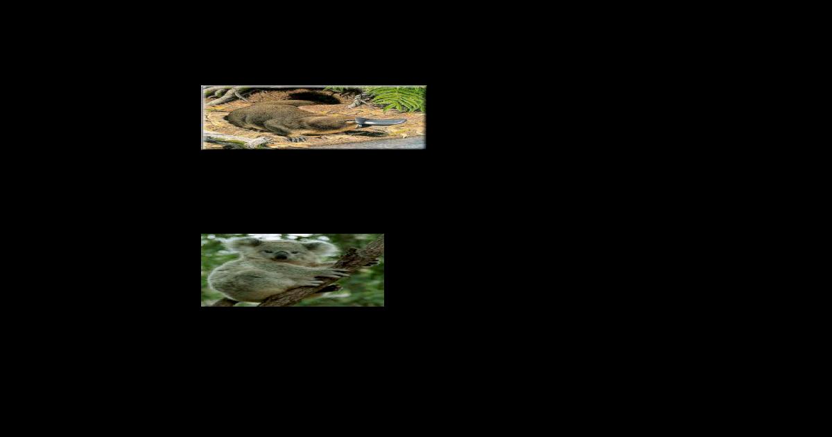 510 Gambar Hewan Wilayah Oriental Terbaru