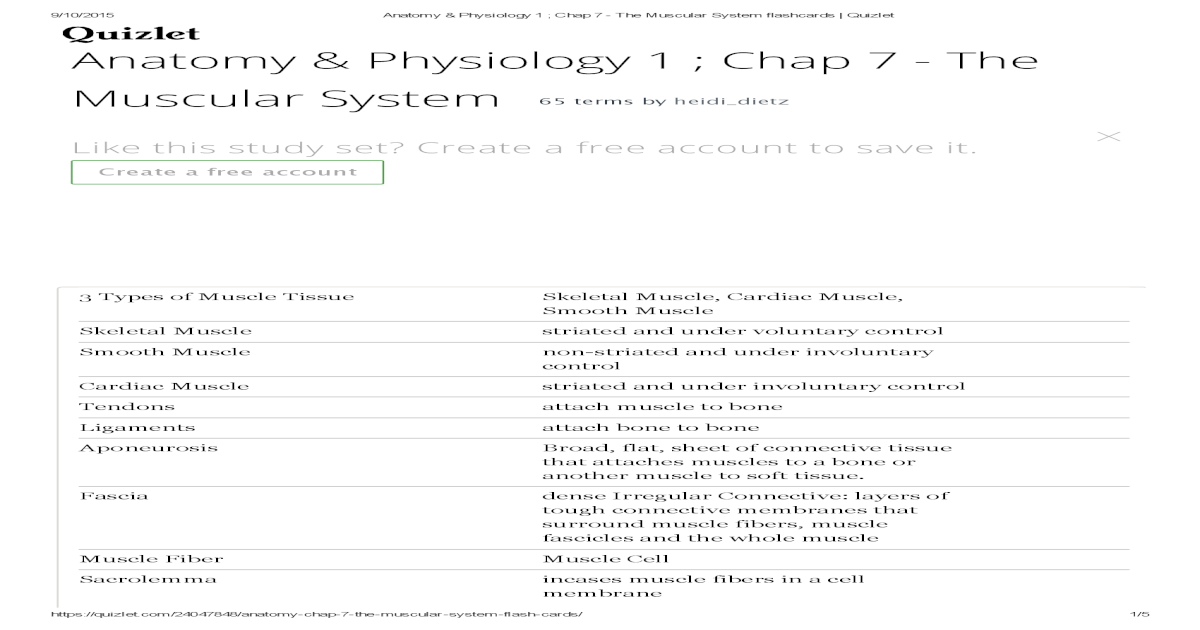 Anatomy & Physiology the Muscular System Flashcards _ Quizlet
