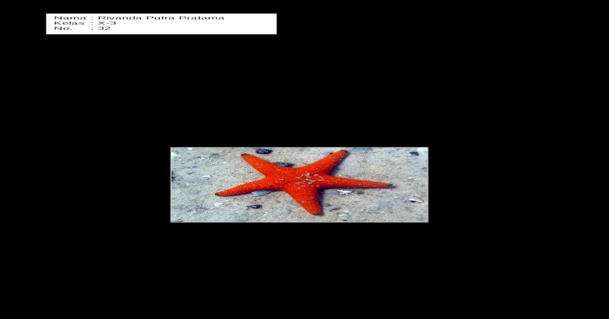 82+ Gambar Hewan Echinodermata Dan Namanya HD Terbaik
