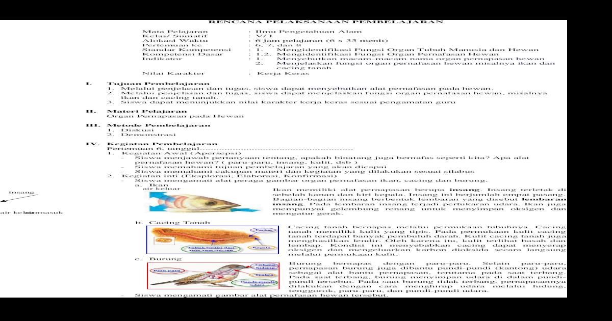 54+ Gambar Organ Pernapasan Hewan Ikan HD Terbaik