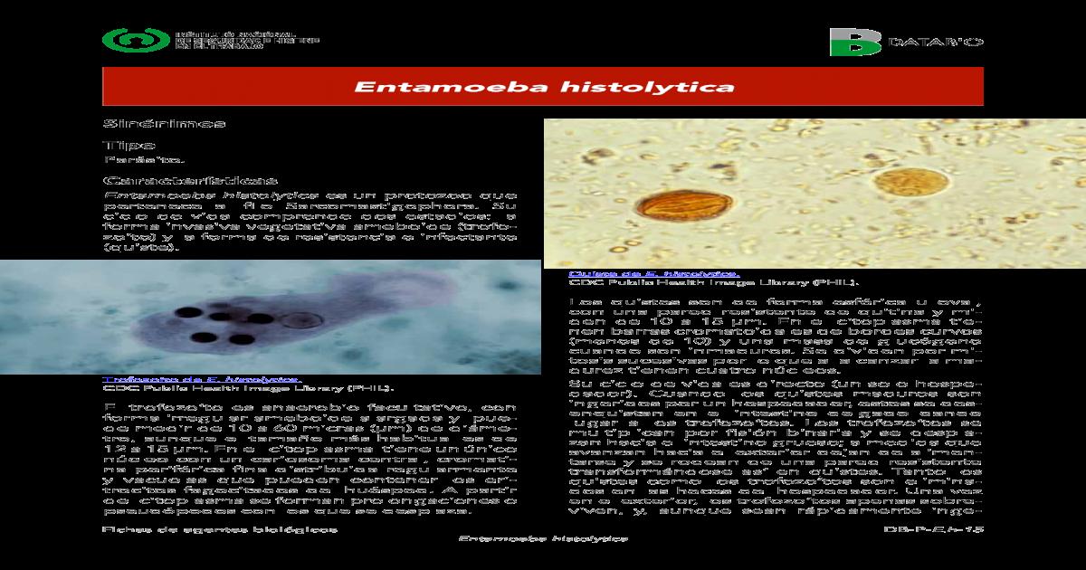 cariosoma entamoeba histolytica
