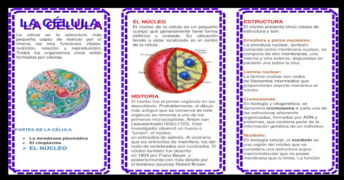 Triptico Celula Biologia