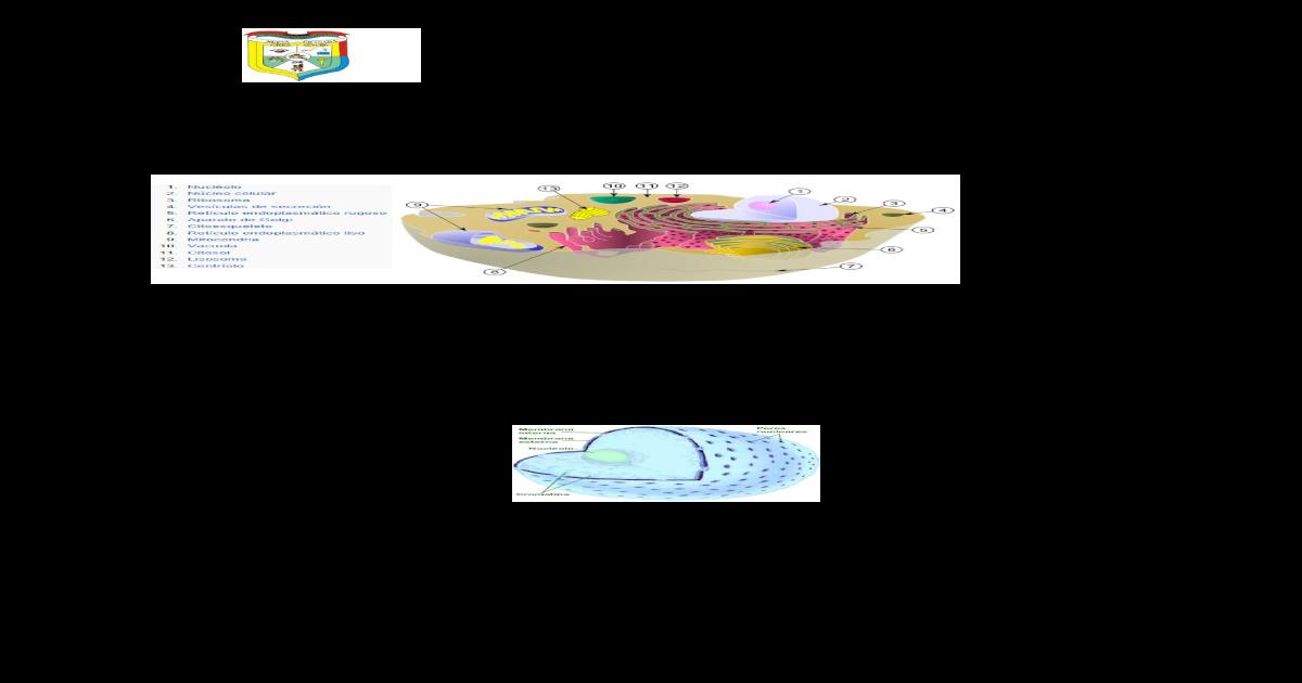 2 Guia Organelos Celulares 1