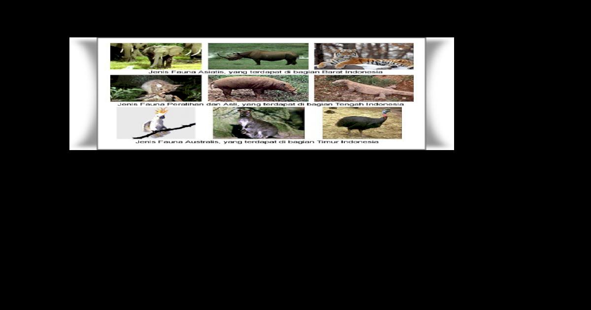 600+ Gambar Hewan Tipe Peralihan HD