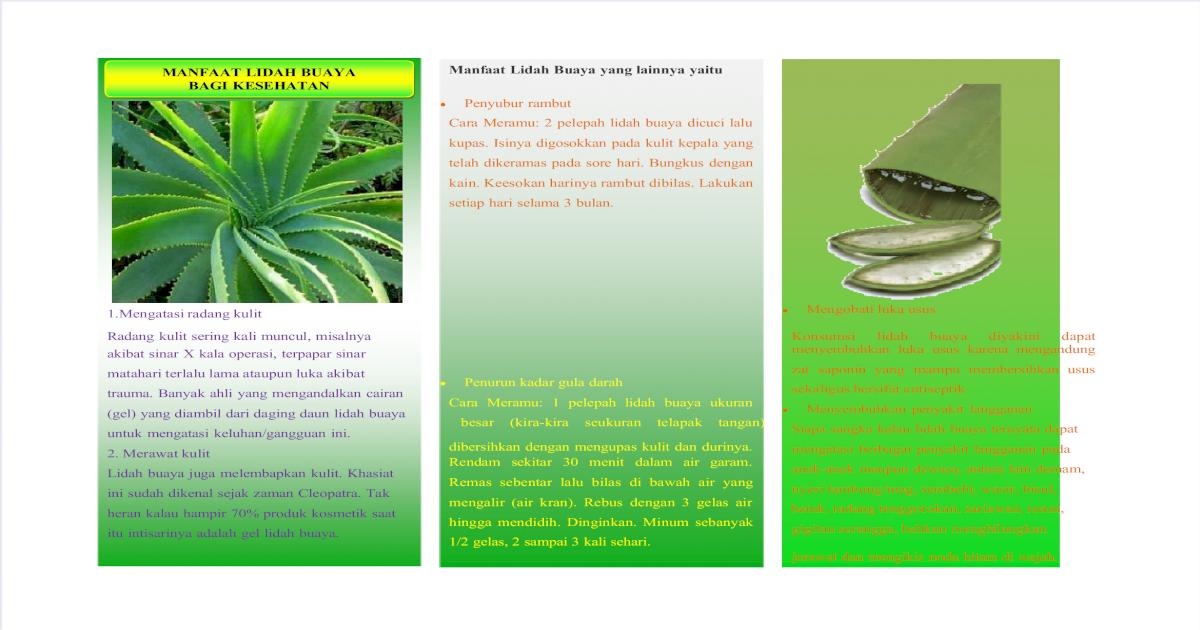 Leaflet Manfaat Lidah Buaya