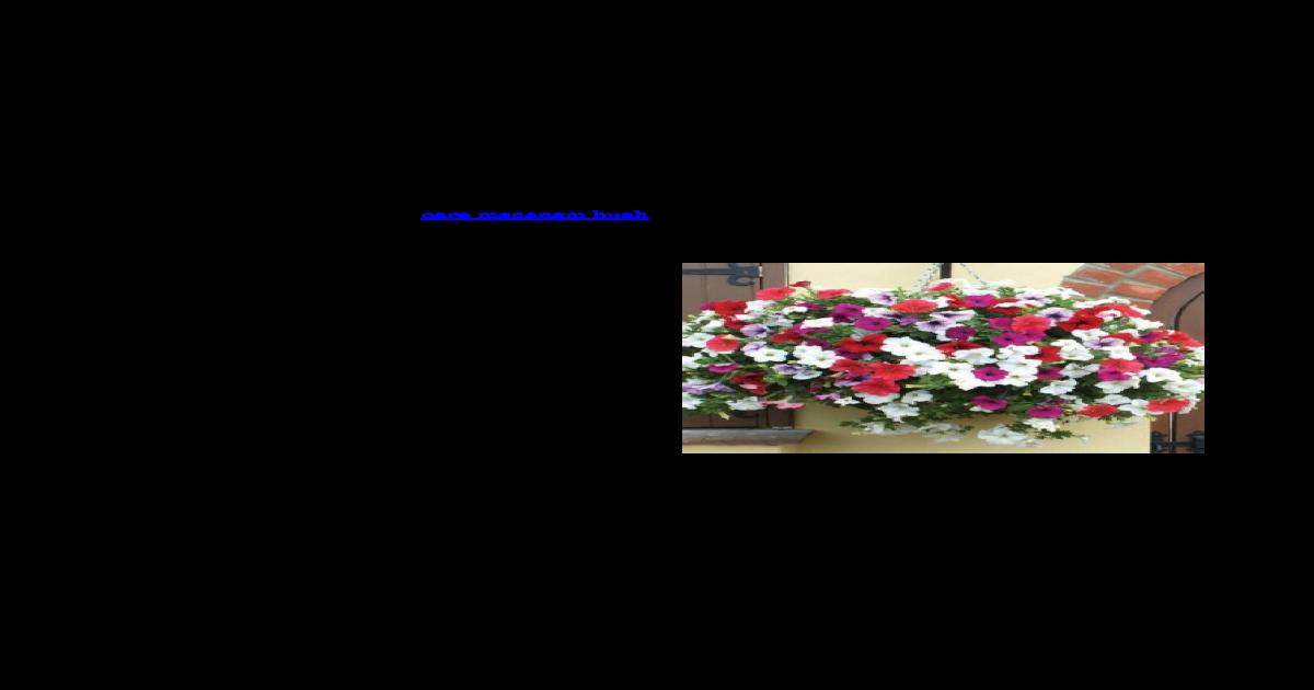 89+ Gambar Bunga Mawar Yang Gampang Paling Keren